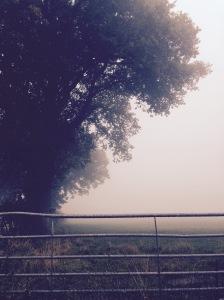 Mist near Wigmore, Shropshire